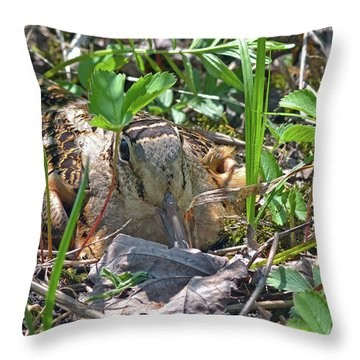Timberdoodle Hen At Her Nest Throw Pillow