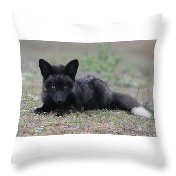 Throw Pillow featuring the photograph Here's Looking At You by Elvira Butler