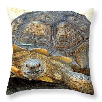 Timothy The Giant Tortoise Throw Pillow