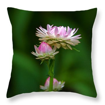 Throw Pillow featuring the photograph Tiny Dahlias Green Aura by Byron Varvarigos