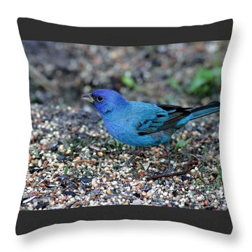 Tiny Indigo Bunting Throw Pillow