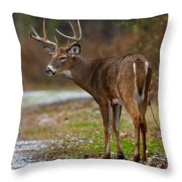 Tired Buck Throw Pillow by Timothy McIntyre
