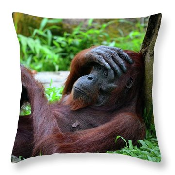 Tired Female Orangutan Ape Rests Against Tree With Hand On Her Head Throw Pillow