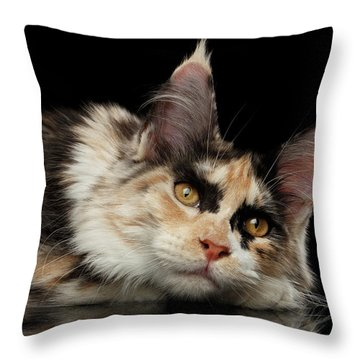 Throw Pillow featuring the photograph Tired Maine Coon Cat Lie On Black Background by Sergey Taran
