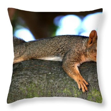 Tired Old Squirrel . R6622 Throw Pillow