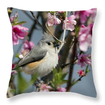 Titmouse And Peach Blossoms Throw Pillow