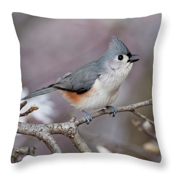 Throw Pillow featuring the photograph Titmouse Song - D010023 by Daniel Dempster