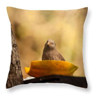 To Eat Or Not To Eat Throw Pillow