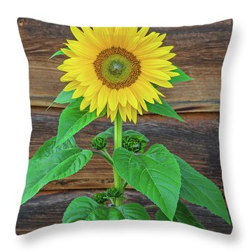 To Love And Be Loved Is To Feel The Sun From Both Sides.  Throw Pillow