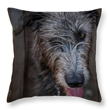 Toby, The Irish Wolfhound Pup Throw Pillow