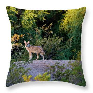 Today's Coyote Throw Pillow