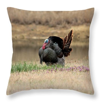 Tom Turkey At Pond Throw Pillow by Sheila Brown