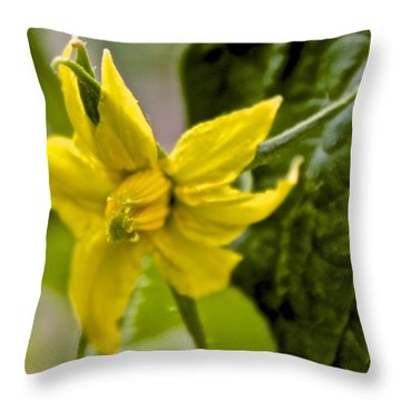 Tomato Babies 2 Throw Pillow