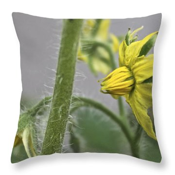 Tomato Babies 3 Throw Pillow
