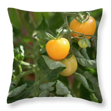 Tomatoes Throw Pillow