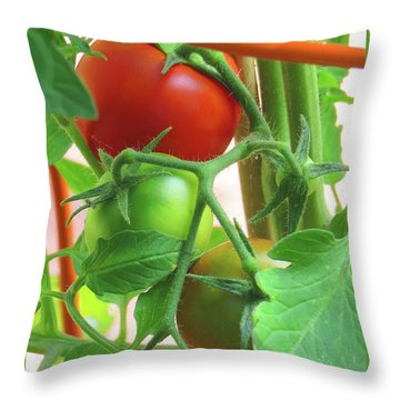 Tomatoes Ripening On The Vine - Images From The Garden Throw Pillow