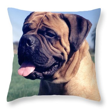 Tonka - Retouched 11x14 Throw Pillow
