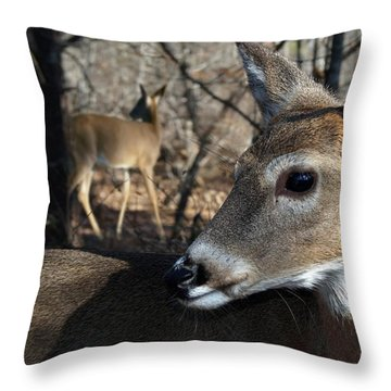 Too Cool Throw Pillow by Bill Stephens