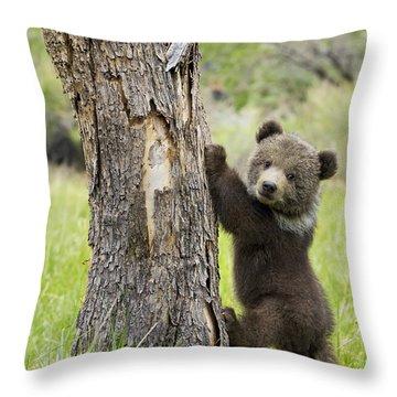 Brown Bear Throw Pillows