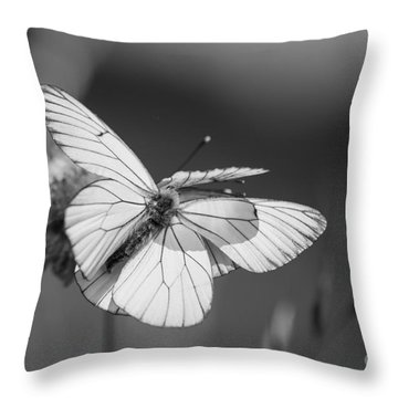 Too Many Wings Throw Pillow by Jivko Nakev