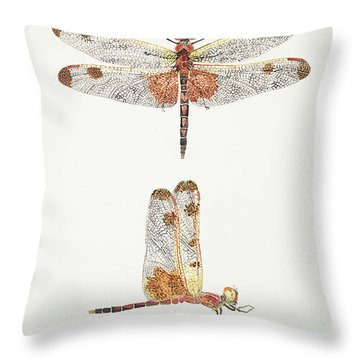 Top And Side Views Of A Male Calico Pennant Dragonfly Throw Pillow