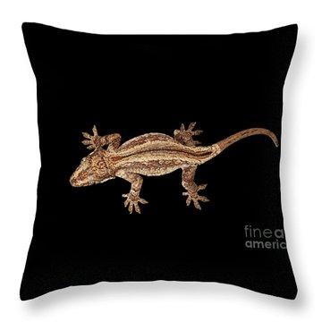 Top View Of Gargoyle Gecko, Rhacodactylus Auriculatus Staring Isolated On Black Background. Native T Throw Pillow by Sergey Taran