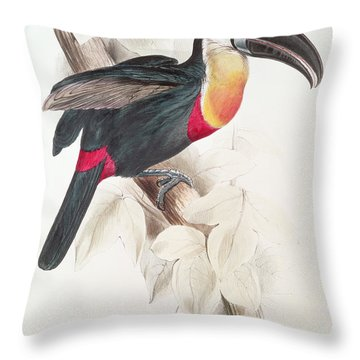 Toucan Throw Pillow by Edward Lear