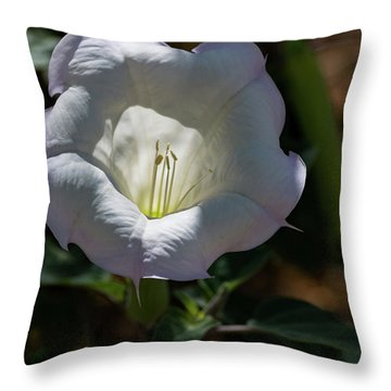 Touch Of Color Throw Pillow