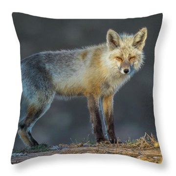 Track Patrol  Throw Pillow