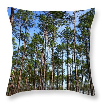 Trail Through The Pine Forest Throw Pillow
