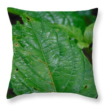Trail Vibes Throw Pillow