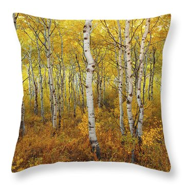 Throw Pillow featuring the photograph Transition by Dustin  LeFevre