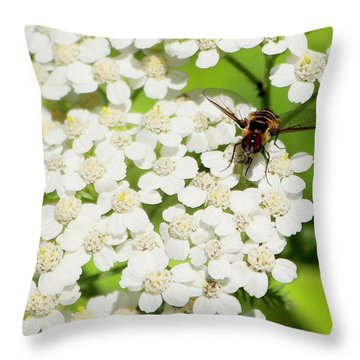 Transverse Flower Fly Throw Pillow