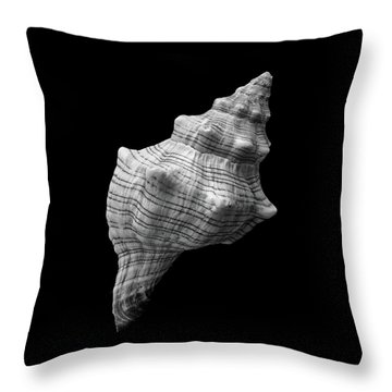 Trapezium Horse Conch Sea Shell Throw Pillow by Jim Hughes