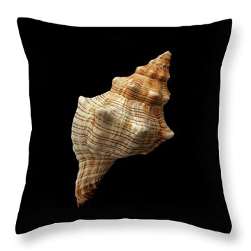 Trapezium Horse Conch Shell Throw Pillow by Jim Hughes
