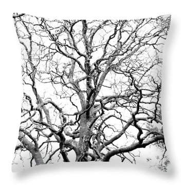 Tree Branches Throw Pillow by Gaspar Avila