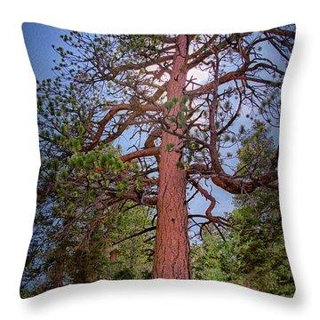 Tree Cali Throw Pillow