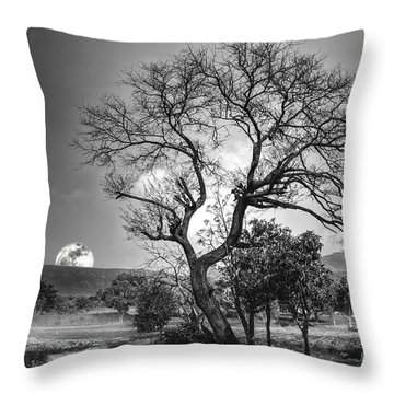 Tree Throw Pillow by Charuhas Images