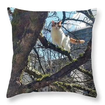 Throw Pillow featuring the photograph Tree Climber by Bill Thomson