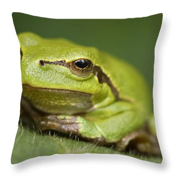 Noord Holland Throw Pillows
