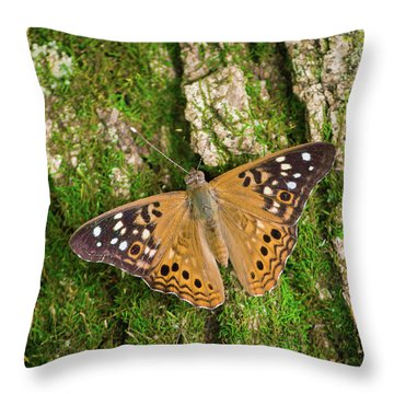 Throw Pillow featuring the photograph Tree Hugger by Bill Pevlor