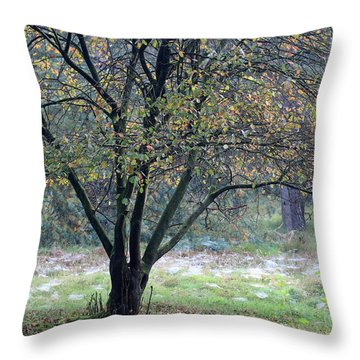 Tree In Forest With Autumn Colors Throw Pillow