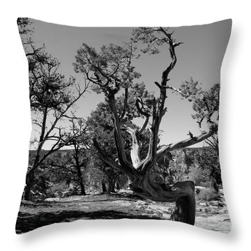 Tree In Grand Canyon Throw Pillow