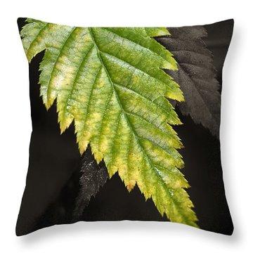 Tree Leaf Study  Throw Pillow