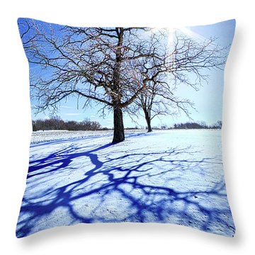 Throw Pillow featuring the photograph Tree Light by Phil Koch