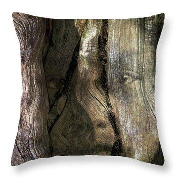 Throw Pillow featuring the photograph Tree Memories # 24 by Ed Hall