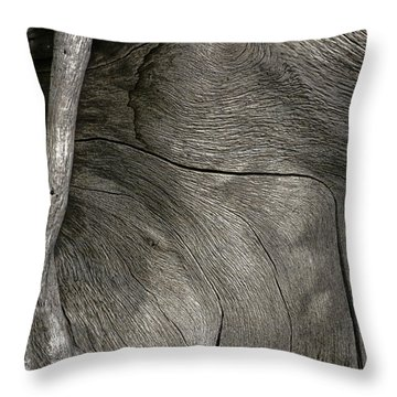 Throw Pillow featuring the photograph Tree Memories # 26 by Ed Hall