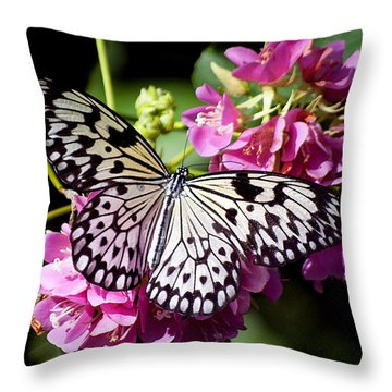 Tree Nymph Butterfly Throw Pillow by Kenneth Albin