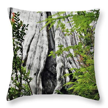 Tree Of Life - Duncan Memorial Big Western Red Cedar Throw Pillow by Christine Till