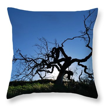 Throw Pillow featuring the photograph Tree Of Light - Straight View 2 by Matt Harang
